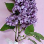 عکس پروفایل گل سنبل زیبا
