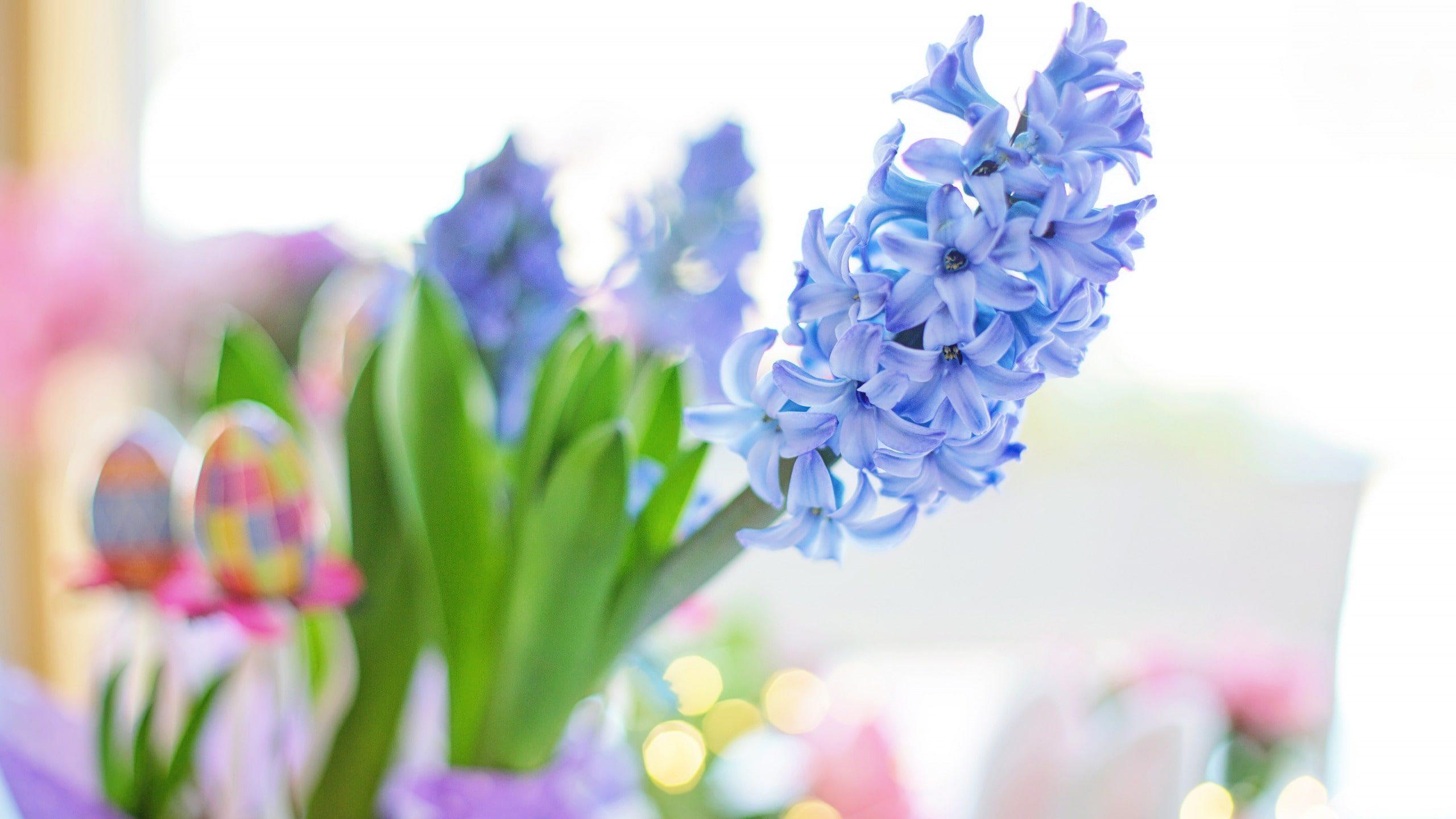 عکس گل سنبل آبی کمرنگ برای پروفایل