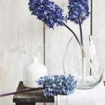 عکس منحصر به فرد گل سنبل