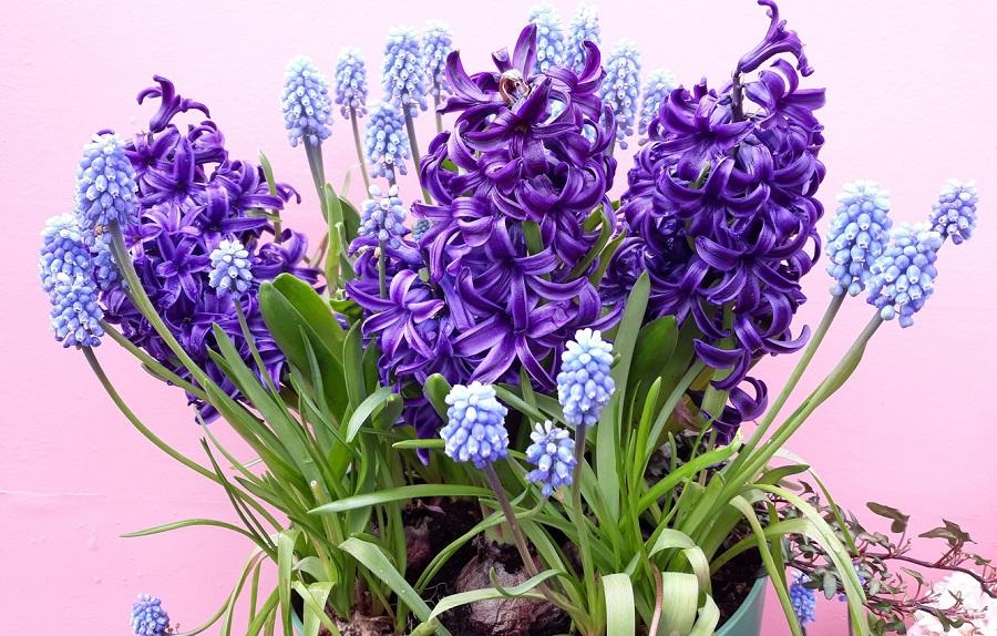 عکس گل سنبل باکیفیت برای پروفایل