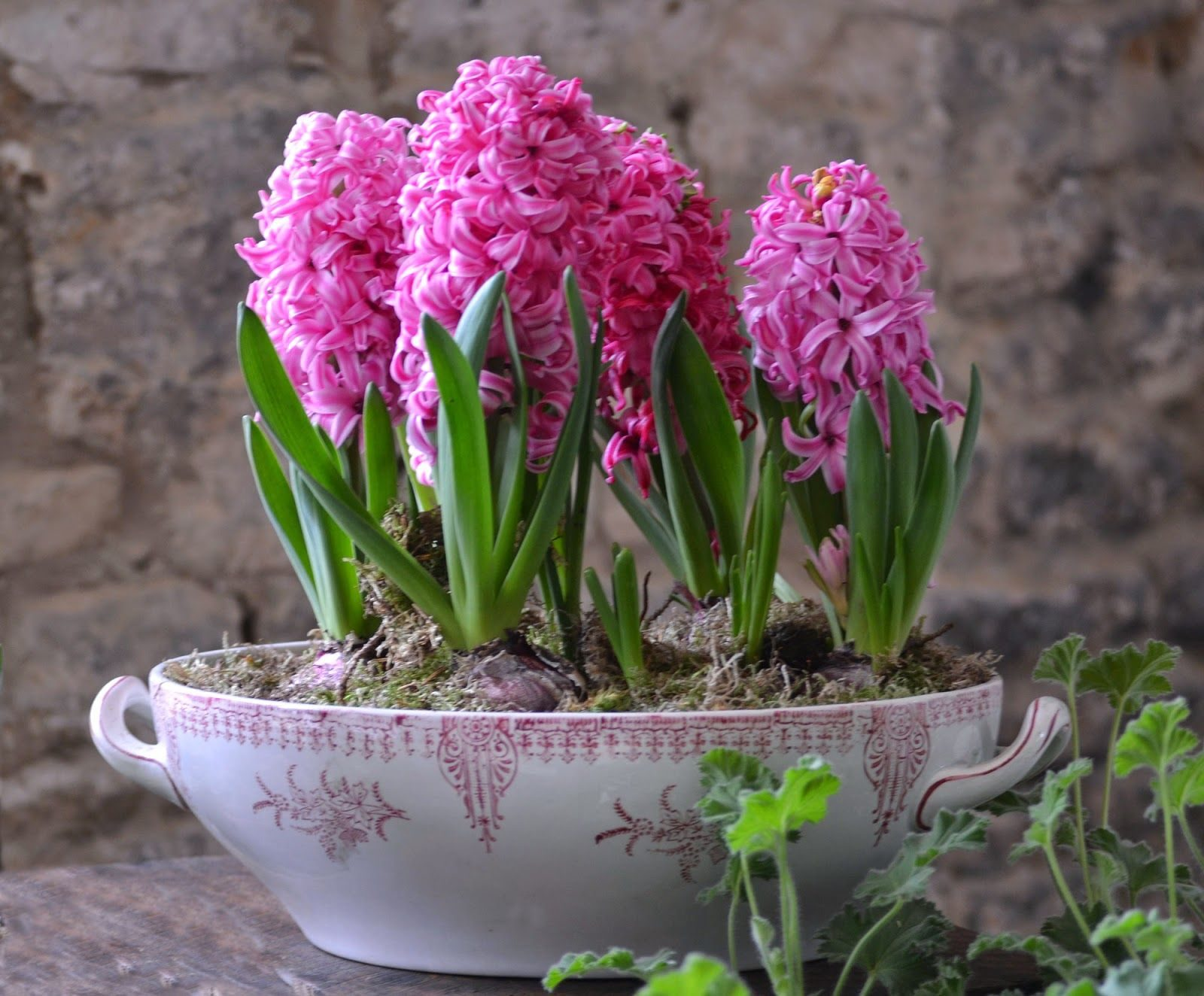 عکس پروفایل گل سنبل طبیعی