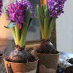 عکس گل سنبل در گلدان مناسب پروفایل