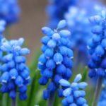 گل سنبل باکیفیت برای پروفایل