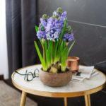 عکس گل سنبل جدید و خاص