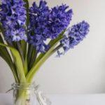 گل سنبل در گلدان شیشه ای